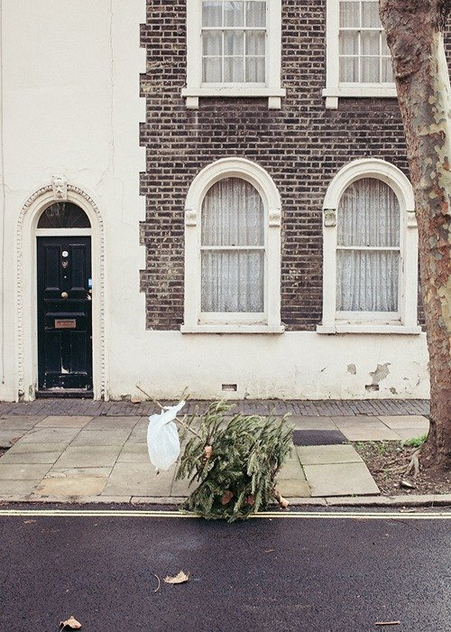 Dead Christmas Trees by James Turner