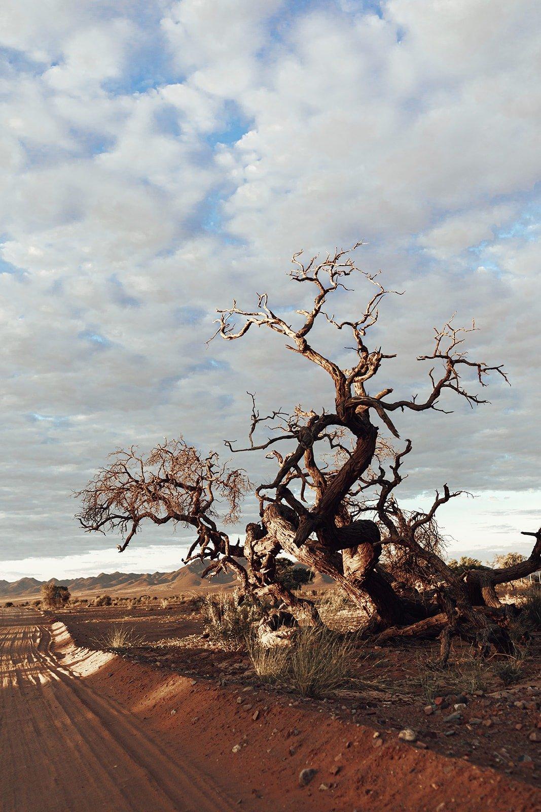 capturing Namibia's authenticity
